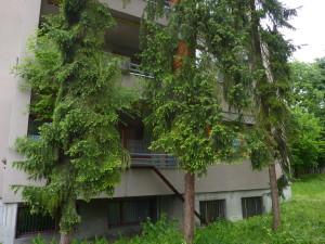 Bäume am falschen Ort nehmen den Bewohnern die Perspektiven im Leben.